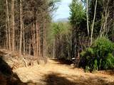 Cooper Hollow / Tilley Rd - Photo 33