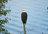 358 Eagle Ridge Drive - Photo 26