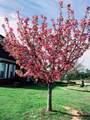 119 Magnolia Way - Photo 36