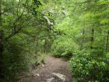 Oakley Way - Photo 26