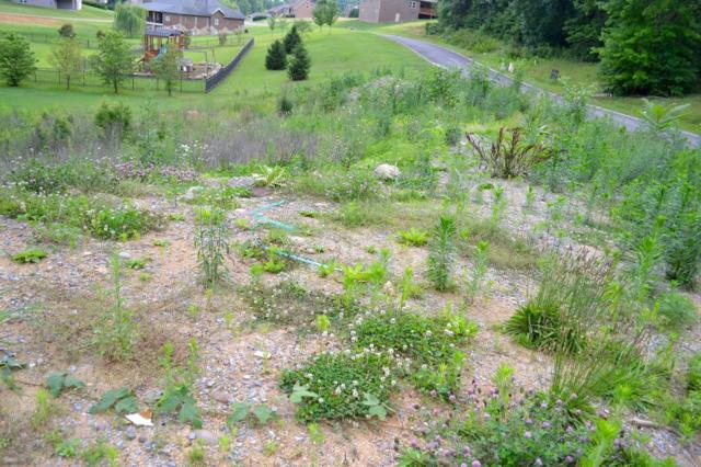 Sierra Lane, Sevierville, TN 37862 (#1005632) :: SMOKY's Real Estate LLC