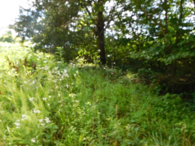 Miles Lane, Cumberland Gap, TN 37724 (#1011210) :: Billy Houston Group