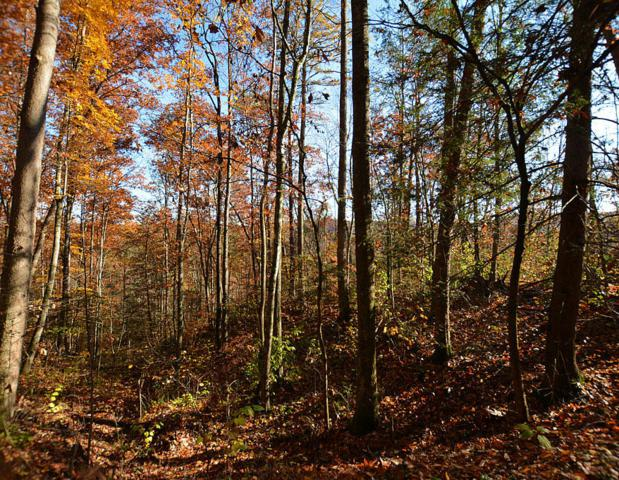 Lot 27 Sugar View Rd, Sevierville, TN 37876 (#1022986) :: Billy Houston Group