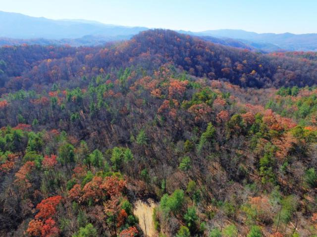 Overlook View Rd, Walland, TN 37886 (#1024964) :: Billy Houston Group