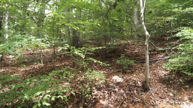 Lot 1105 Cove Lane, Baneberry, TN 37890 (#1032468) :: Shannon Foster Boline Group