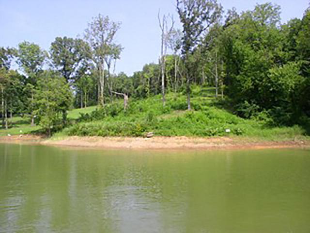 Lakeside Drive, White Pine, TN 37890 (#1033290) :: Billy Houston Group