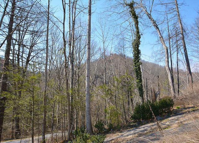 638 Red Bud Lane, Gatlinburg, TN 37738 (#1033466) :: Billy Houston Group