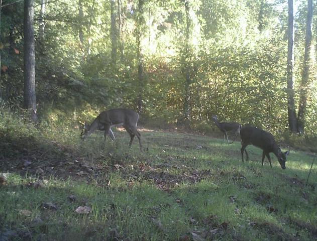 Butcher Valley Rd, Rogersville, TN 37857 (#1034352) :: Billy Houston Group