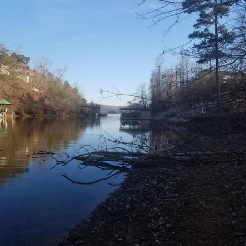 Blue Green Way, Rockwood, TN 37854 (#1034790) :: Shannon Foster Boline Group