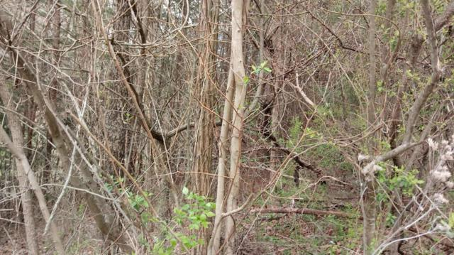 Lot 41 Pecan Tree Lane, Newport, TN 37821 (#1035376) :: Billy Houston Group