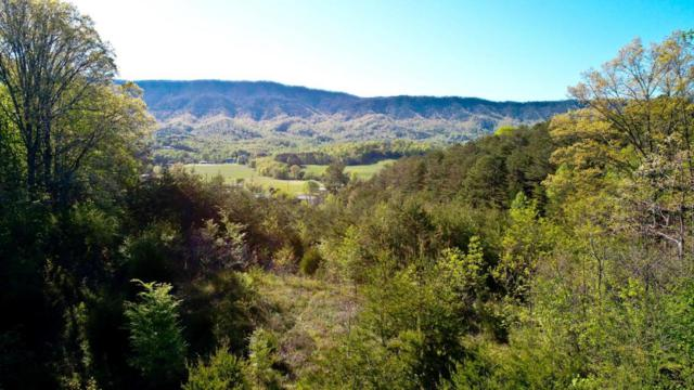 Lot 9 Clear View Drive, Newport, TN 37821 (#1039866) :: Billy Houston Group