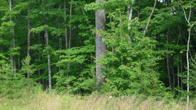 869 Spruce Creek Rd, Jamestown, TN 38556 (#1042563) :: Billy Houston Group