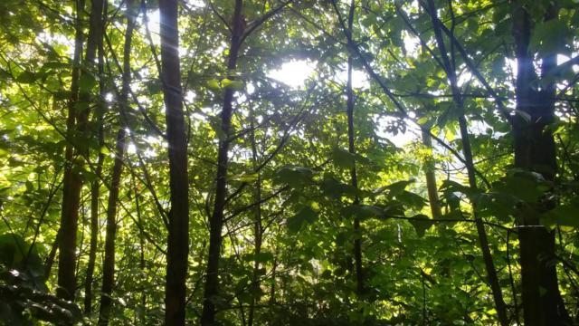 Lot 20 Wild Azalea Lane, Sevierville, TN 37862 (#1048199) :: Billy Houston Group