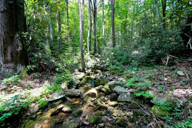 Lot 7 Tomahawk Drive, Cosby, TN 37722 (#1049386) :: Billy Houston Group