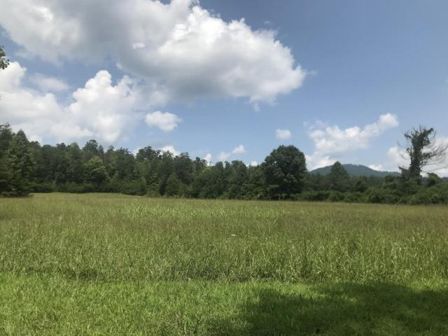 Old Wilhite Rd, Cosby, TN 37722 (#1052497) :: Billy Houston Group