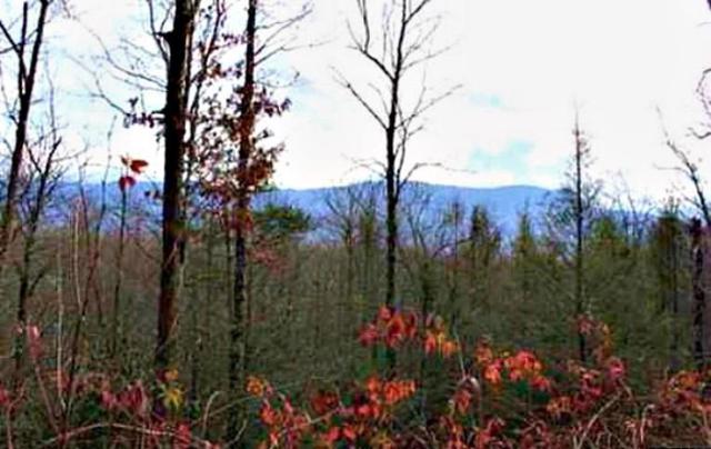Lot 68 Big Bear Ridge Rd, Gatlinburg, TN 37738 (#1054765) :: Billy Houston Group