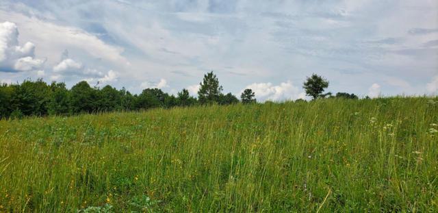 Lot 9 Nichol Creek Drive, Jamestown, TN 38556 (#1057857) :: CENTURY 21 Legacy