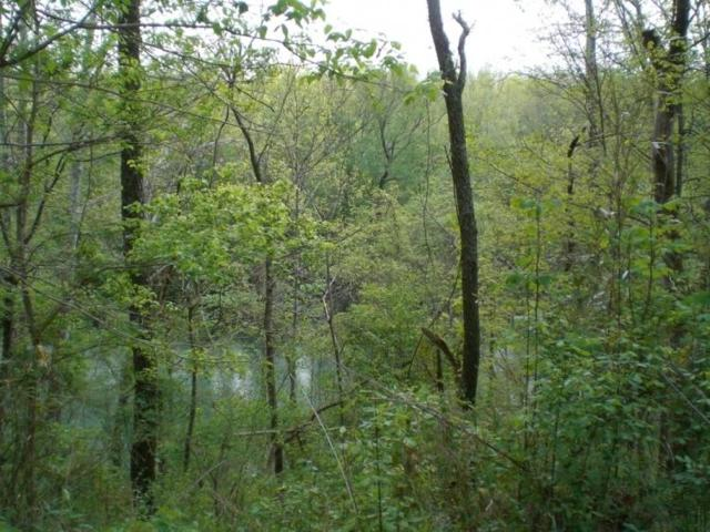 J D Chambers Rd, Robbins, TN 37852 (#1058791) :: Shannon Foster Boline Group