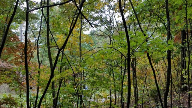 Tbd Fire Tower Rd, Mooresburg, TN 37811 (#1060556) :: Billy Houston Group