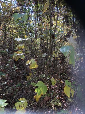 Tanzanite Trail, New Tazewell, TN 37825 (#1060913) :: Billy Houston Group