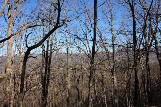 Lot 12 Little Mountain Way, Townsend, TN 37882 (#1067780) :: Venture Real Estate Services, Inc.