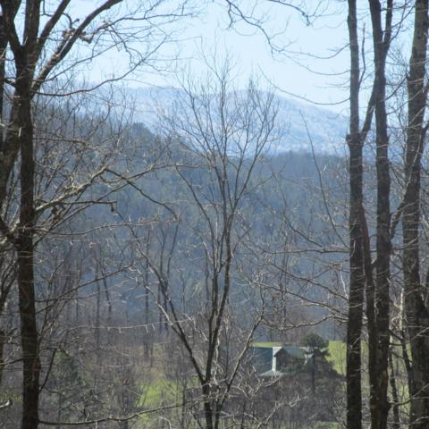 Greasy Cove Road, Cosby, TN 37722 (#1077131) :: SMOKY's Real Estate LLC