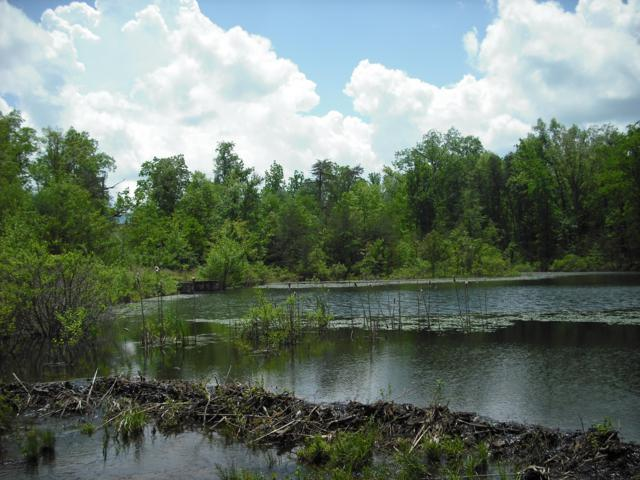 Riverview Ct. (Lot #46), Crossville, TN 38555 (#1081363) :: Realty Executives Associates
