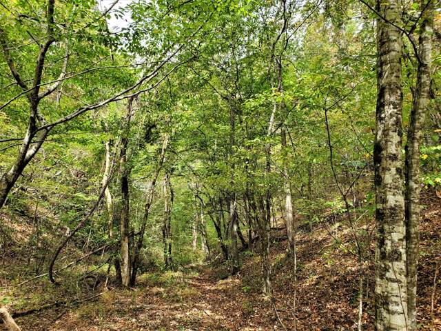 Shell Mountain Rd, Sevierville, TN 37876 (#1098166) :: Billy Houston Group
