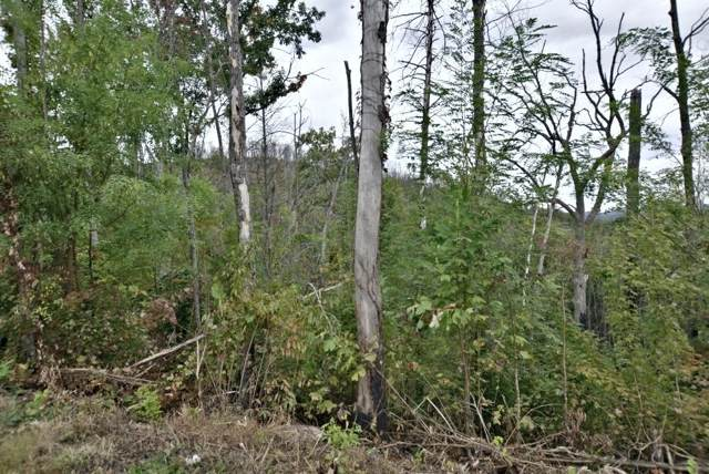 Lot 479 Pinecrest Court, Gatlinburg, TN 37738 (#1098508) :: The Terrell Team