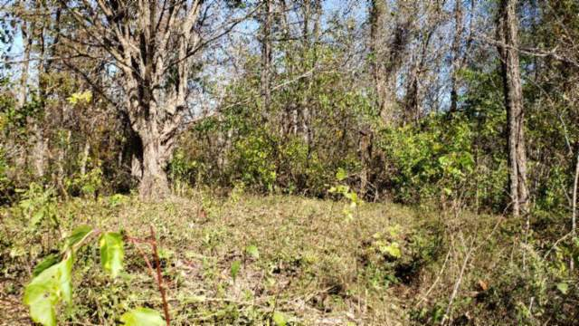 2123 Riley Creek Rd, Whitleyville, TN 38588 (#1099860) :: Venture Real Estate Services, Inc.