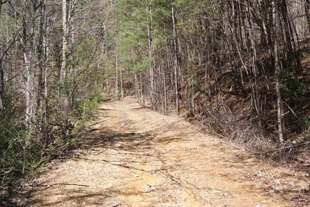 Shady Gap Way, Cosby, TN 37722 (#1112410) :: Shannon Foster Boline Group