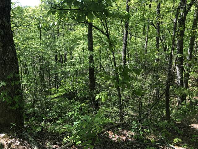 Lot 12 Black Oak Drive, Sevierville, TN 37876 (#1115314) :: Catrina Foster Group
