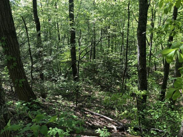 Lot 11 Black Oak Drive, Sevierville, TN 37876 (#1115317) :: Catrina Foster Group