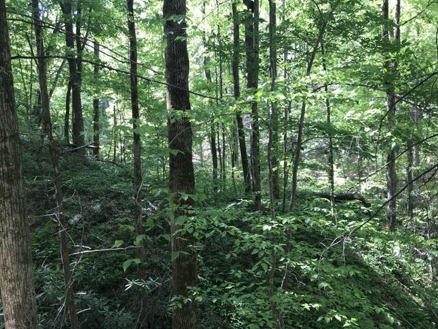 Black Walnut Flats Rd Rd, Sevierville, TN 37862 (#1115753) :: Tennessee Elite Realty