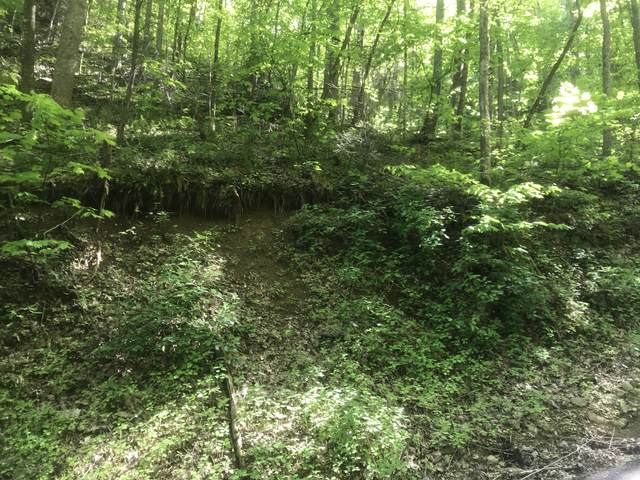 Black Walnut Flats Rd, Sevierville, TN 37862 (#1115770) :: The Terrell Team