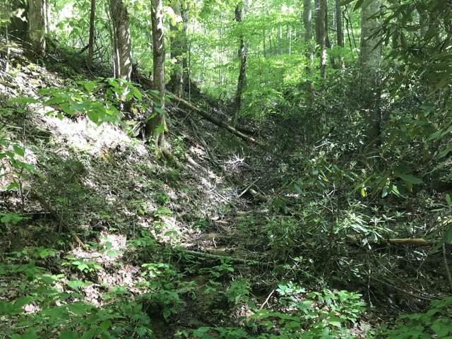 Black Walnut Flats Rd, Sevierville, TN 37862 (#1115773) :: Tennessee Elite Realty