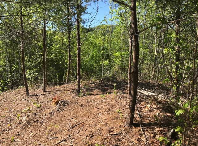 Lot 3 Sonshine Ridge Rd, Cosby, TN 37722 (#1119053) :: Tennessee Elite Realty