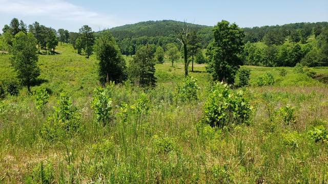 Lot 83 Twin Lakes Drive, Loudon, TN 37774 (#1119631) :: Catrina Foster Group