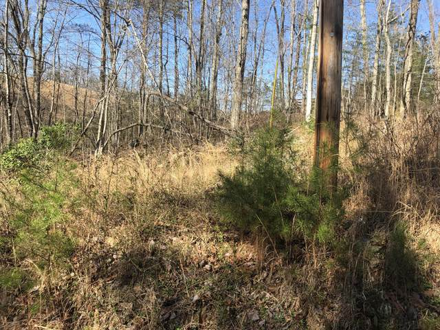 Lot 163 Maple Drive #2, Spring City, TN 37337 (#1122170) :: Tennessee Elite Realty