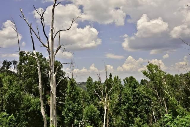 736 Wiley Oakley Drive, Gatlinburg, TN 37738 (#1123775) :: Catrina Foster Group