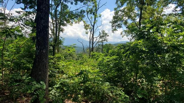 Tall Oak Way, Sevierville, TN 37876 (#1126816) :: Tennessee Elite Realty