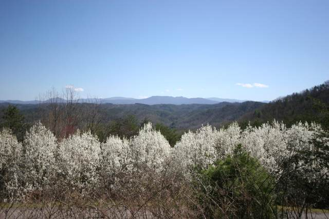 Highlands Bluff Rd, Tellico Plains, TN 37385 (#1129495) :: Exit Real Estate Professionals Network