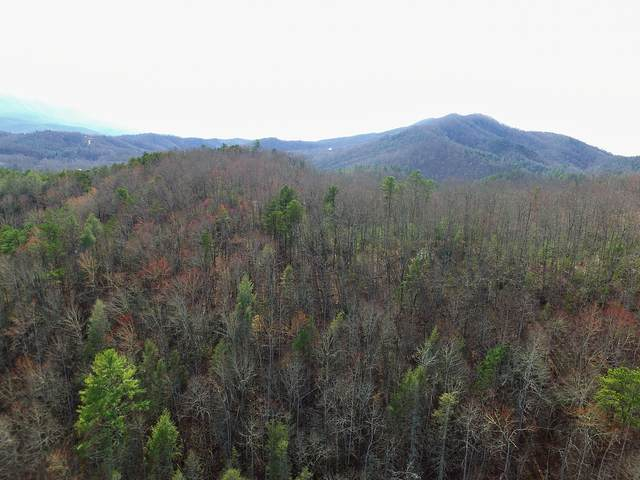 Balls Hollow Rd, Cosby, TN 37722 (#1133756) :: Billy Houston Group