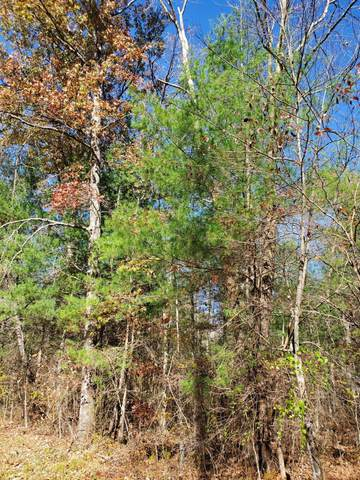 Lot 3 Cole Place Rd, Allardt, TN 38504 (#1134974) :: Shannon Foster Boline Group
