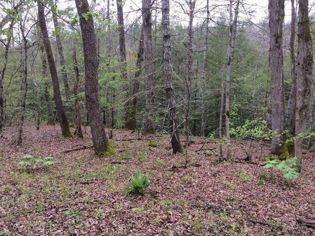 White Oak Creek Lane Lot 16, Rugby, TN 37733 (#1137009) :: The Cook Team