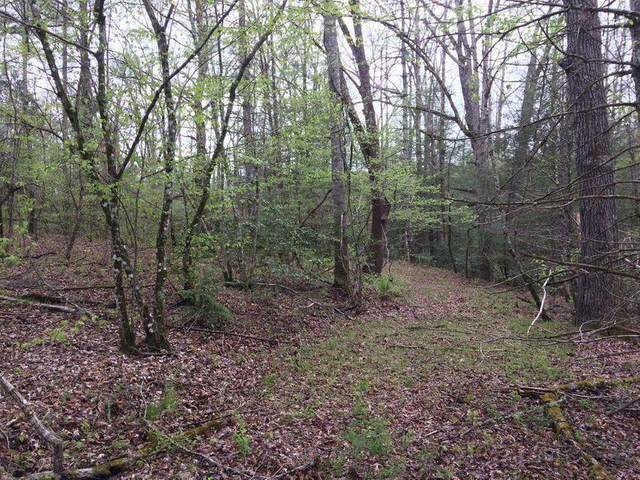 White Oak Creek Lane Lot 17, Rugby, TN 37733 (#1137012) :: The Cook Team