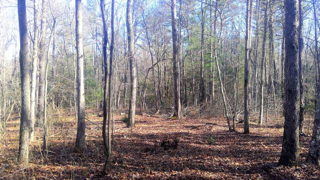 Lot 4a Long Branch Lane, Allardt, TN 38504 (#1137101) :: Billy Houston Group