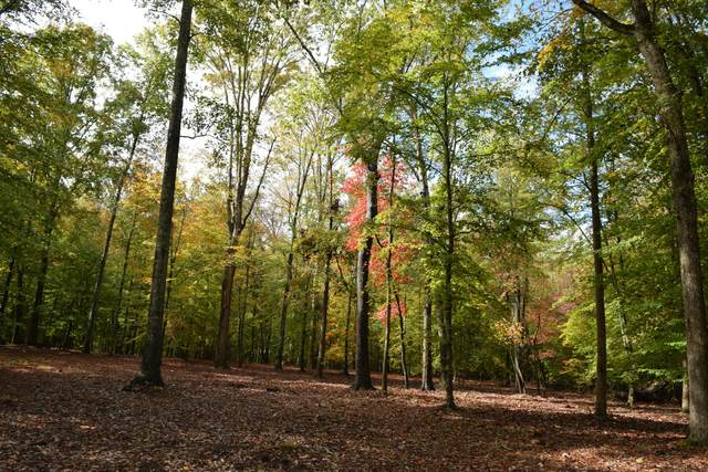 lot 8 Peaceful Point, Dandridge, TN 37725 (#1138944) :: Realty Executives Associates Main Street