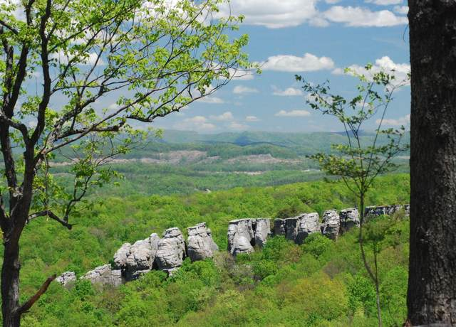 Mcclouds Trail, Duff, TN 37729 (#1139463) :: Billy Houston Group