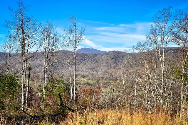 Dutch Valley Rd, Clinton, TN 37716 (#1143478) :: Billy Houston Group